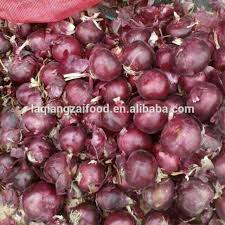 Red Cheapest Price For Onion Pickled