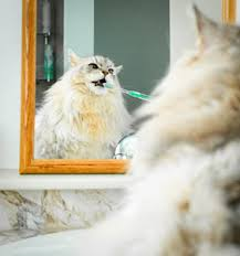 cat dental care home dental care for cats cathealth