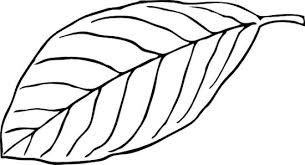 Banana leaf clipart black and white collection