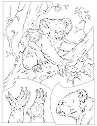 Coloring Page Koala Animals 32