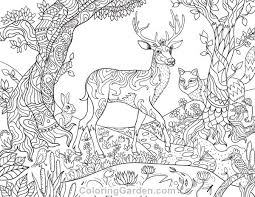 Free Printable Forest Creatures Adult Coloring Page The Pages Includes Trees And Animals Such