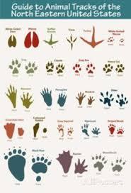 Animal Tracks Coloring Page