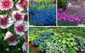Perennial Garden Plan Plants and Flowers Layer 4