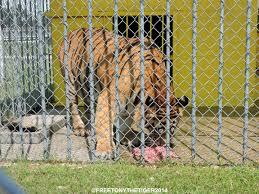 Bobby Jindal | Free Tony The Tiger