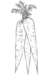 Click To See Printable Version Of Long Yellow Carrots Coloring Page