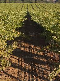 78 Best TrellisesEspalier Arbor Pergola Images On Pinterest Diy Grape Vine Trellis