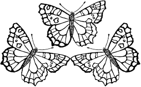 Butterflies Coloring Pages Printable Butterfly Page Monarch Free Life Cycle Caterpillar Full Size