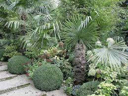la plantation du palmier chanvre