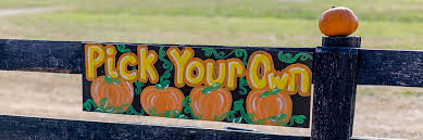 Pumpkin Patch Jacksonville Al lyon family farms taft pumpkin patch fall pumpkin picking