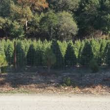 Santa Cruz Ca Christmas Tree Farms by Castro Valley Christmas Tree Farm 10 Photos U0026 35 Reviews