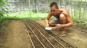 Organic Farming In The Philippines (reality TV, Episode 3:
