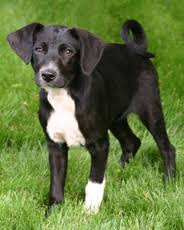 Non Shedding Dogs Small To Medium by Pet Rescue