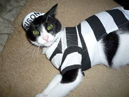 costume for cat win a cat costume for from nip and bones catster