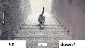 cat stairs professor explains whether cat is going up or stairs cnet