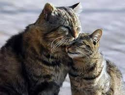 cats mating cat mating the process and what to expect