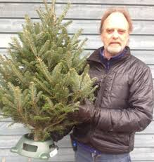 Fraser Fir Christmas Trees For Sale by The Tiny Perfect Christmas Tree Toronto Star