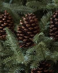 Silver Tip Christmas Tree Artificial by Big Pinecone Kit Set Of 50 Balsam Hill