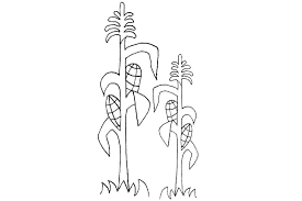 Corn Stalk Coloring Page Imgkid The Image Kid