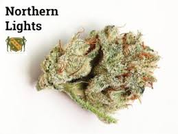 All You Need to Know About the Northern Lights Strain MSNL Blog