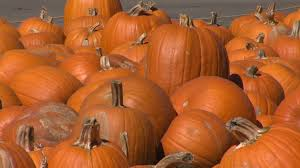 Pumpkin Patch Near Tulsa Ok by Lawton 1st United Methodist Church Invites You To The Pumpkin Pa
