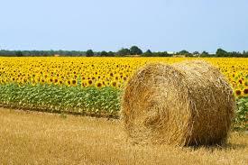 chambre d駱artementale d agriculture chambre d駱artementale d agriculture 28 images calam 233 o