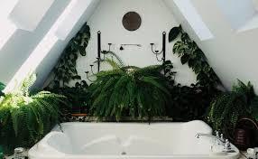 mit diesen pflanzen verwandelst du dein bad in einen mini