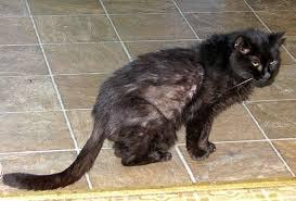 my cat has dandruff cat a cat s photos harry