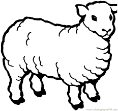 Coloring Pages Sheep Mammals Sheeps