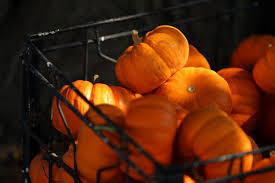 Pumpkin Patches Maryland Heights Mo by Rombach Family Feud Threatens Future Of Chesterfield Farm Beloved