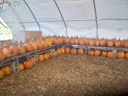 Free Pumpkin Patch Fort Collins pricing a u0026 h farm