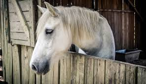 Best Horse Shedding Blade by Marcia Radosevich Author At Marcia Radosevich