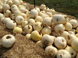 Pumpkin Patches Maryland Heights Mo by Rombach Farms Pumpkin Patch Closed 19 Photos U0026 17 Reviews
