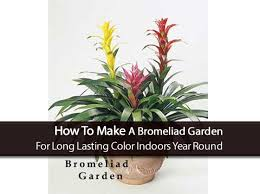 Pot Plants For The Bathroom by 17 Best Bathroom Plants How To Use How To Choose No Light Or