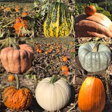 Bishops Pumpkin Farm Employment by Big Bald Lake Cottagers Association Home Facebook
