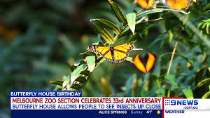 100 Butterfly House Melbourne Nine News On Twitter A Special Milestone At