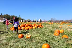 Pumpkin Patch Animal Farm In Moorpark California by The Best Corn Mazes In Los Angeles
