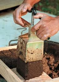 Homemade Fertilizer For Pumpkins by How To Grow Pumpkins Vegetable Gardener