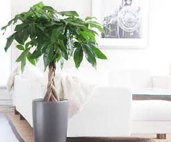 Best Plant For Bathroom Feng Shui by Good And Bad Feng Shui Plants