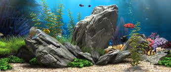 3D Fish Aquarium - 21:9 [Live Wallpaper] - (1080p) - YouTube The Green Machine Aquascaping Shop Aquarium Plants Supplies Photo Collection Aquascape 219 Wallpaper F Amp 252r Of The Month October 2009 Little Hill Wallpapers Aquarium Beautify Your Home With Unique Designs Design Layout New Suitable Plants Aquariums Pinterest Pics Truly Inspired Kinds Ornamental Aquascaping Martino Agostini Timelapse Larbre En Mousse Hd Youtube Beauty Of Inside Water Garden Inspirationseekcom Grass Flowers Beautiful Background