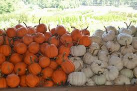 Gainesville Ga Pumpkin Patch by Georgia Market Bulletin Blog Autumn Agritourism Destinations