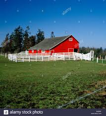 BRIGHT RED BARN, CHARLES W. WILSON RANCH; DAIRY & BEEF CATTLE ... Red Barn Washington Landscape Pictures Pinterest Barns Original Boeing Airplane Company Building Museum The The Manufacturing Plant Exterior Of A Red Barn In Palouse Farmland Spring Uniontown Ewan Area Usa Stock Photo Royalty And White Fence State Seattle Flight Interior Hip Roof Rural Pasture Land White Fence On Olympic Pensinula