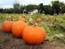 Pumpkin Picking In Freehold Nj by Apple Picking Hayrides Other Fall Farm Fun East Windsor Nj Patch