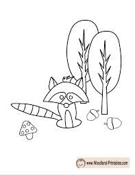 Free Printable Raccoon Coloring Page