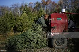 Christmas Tree Baler by A Christmas Tree Harvest As The Holiday Season Approaches Photos