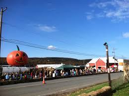 Pumpkin Picking Nj Corn Maze by Visit Nj Farms Ort Farms