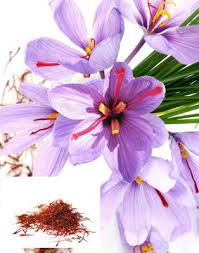 oderings gardening guide saffron grow your own