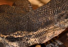 Snake Skin Shedding Lucky by Off The Beaten Path February 2013