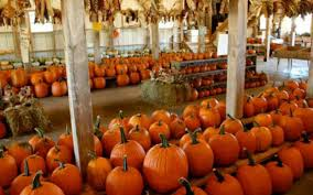 Pumpkin Patch Illinois Chicago by America U0027s Best Pumpkin Farms Travel Leisure