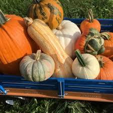 Pumpkin Picking Near Lancaster Pa by Glen Run Valley View Farm Temp Closed Pumpkin Patches 280