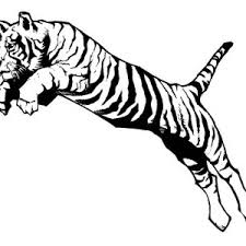 A Typical Tiger Pounce In Hunting Coloring Page